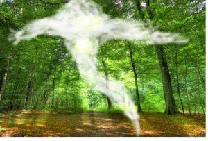 אינטואיציה החוש השישי - אורן נוטוביץ