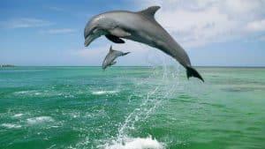 אורן נוטוביץ דולפין-300x169 סיאנס: כן או לא? בלוג תקשור  סיאנס האם מותר לעשות סיאנס